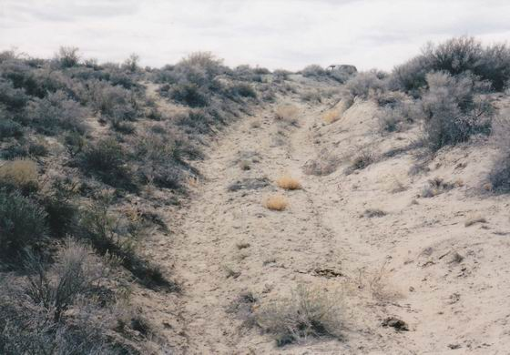 A section of the original Applegate Trail.